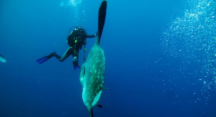 Mola Mola @ Nusa Penida